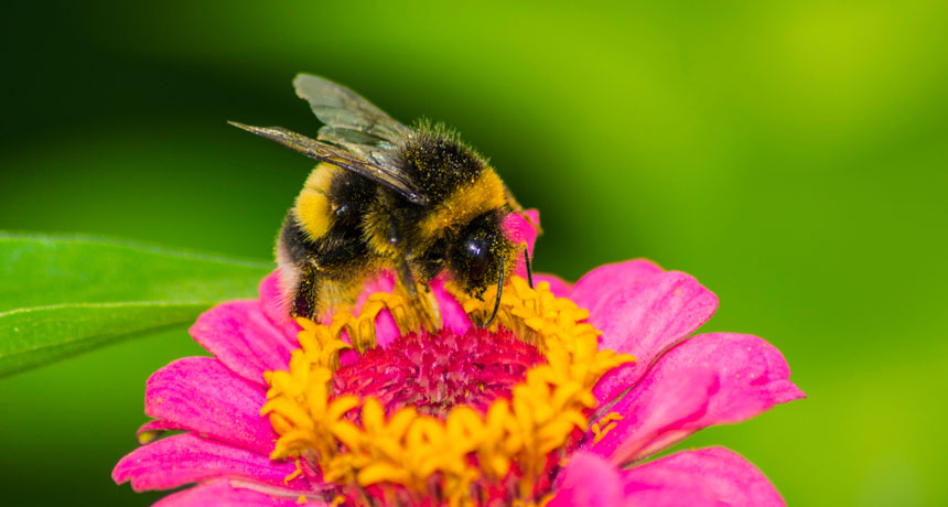 The Best Plants to Make a Central Indiana Bee Heaven